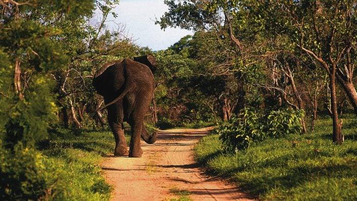 Animals---Elephant, Copyright Royal Malewane.
