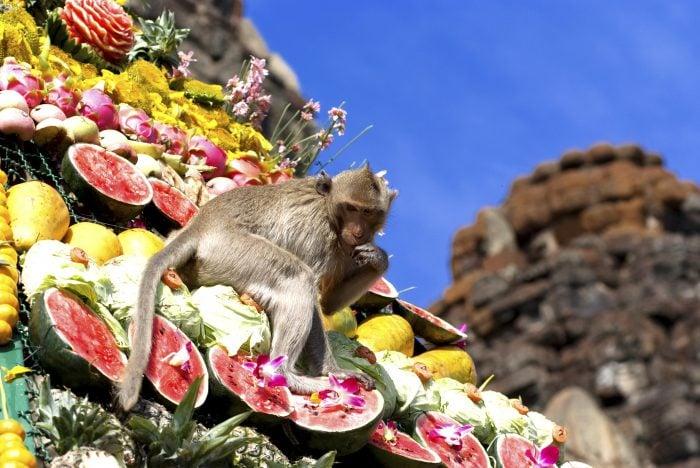 monkey%20buffet%20thailand_0.jpg