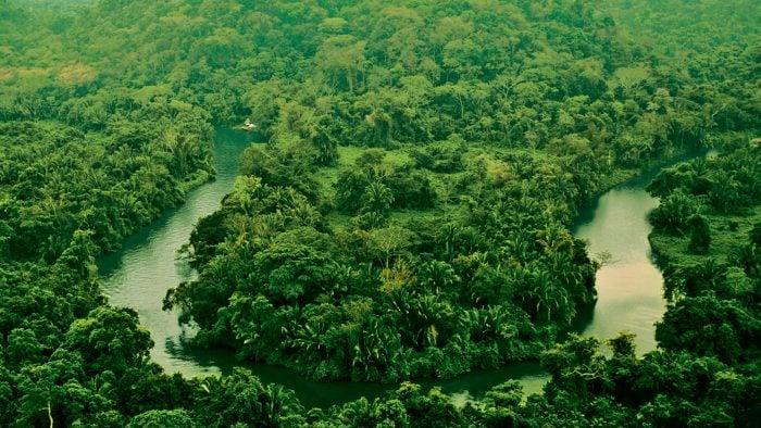 The lush Punta Gorda rainforest.