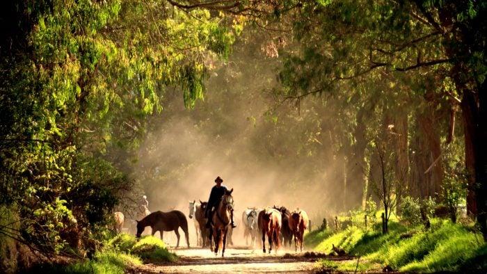 Zuleta-Horses-3_2.jpg