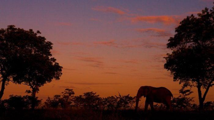 Elephants-4_0.jpg
