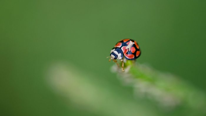 General-Game-Insects-7.jpg