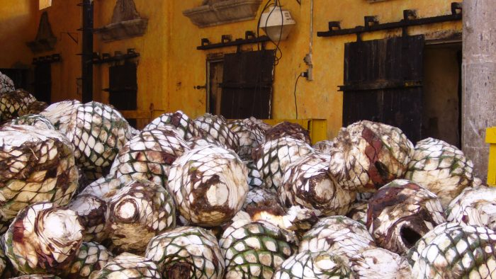 Agave-cores.jpg