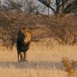 africa-botswana-okavango