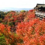 Kit Japan autumn leaves