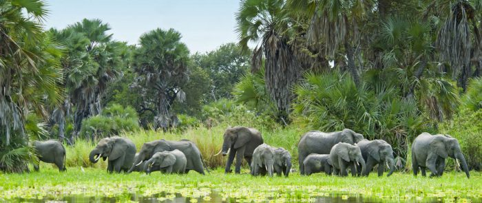 Elephants, Selous Game Reserve, Tanzania