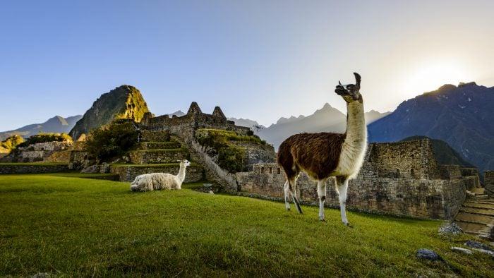 machu-picchu-ruins-with-laama