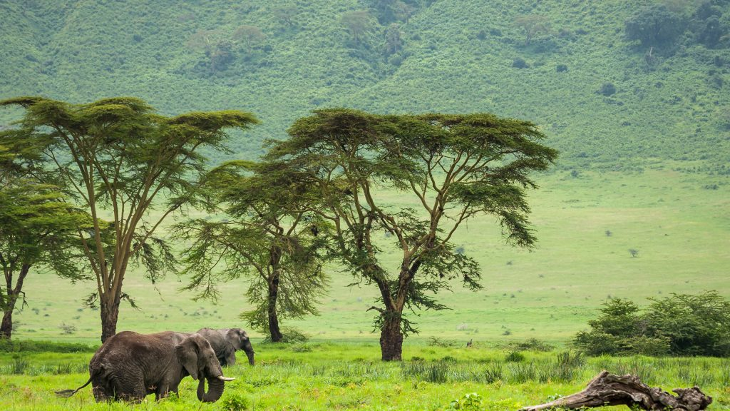 ngorongoro-elephants