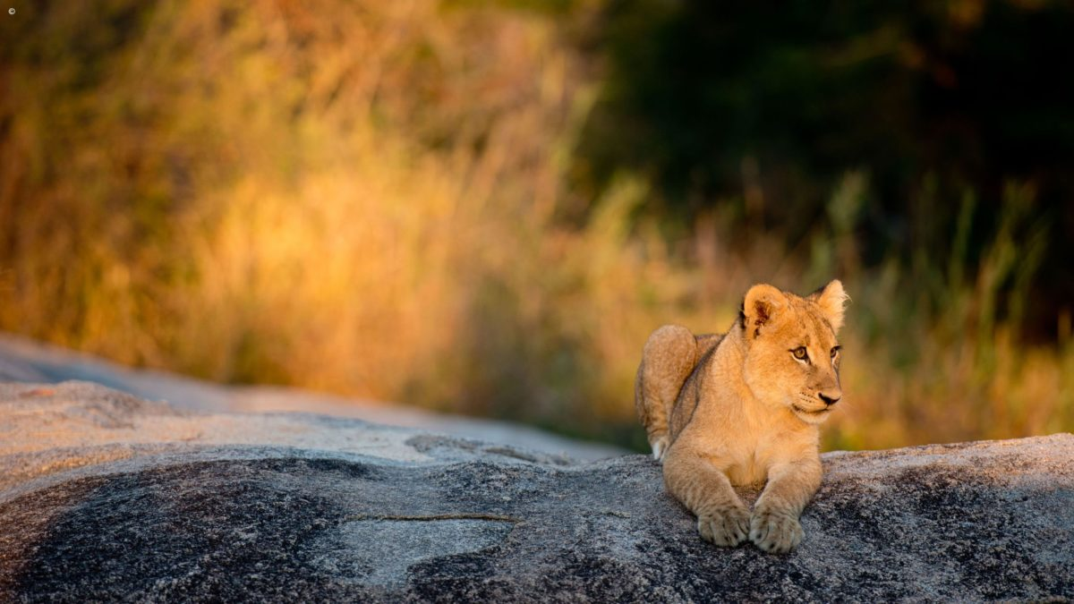 Luxury African Safari Holidays & Private Tours | Jacada Travel