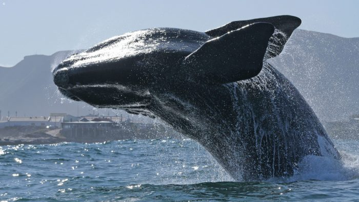 South Africa - Whale Watching