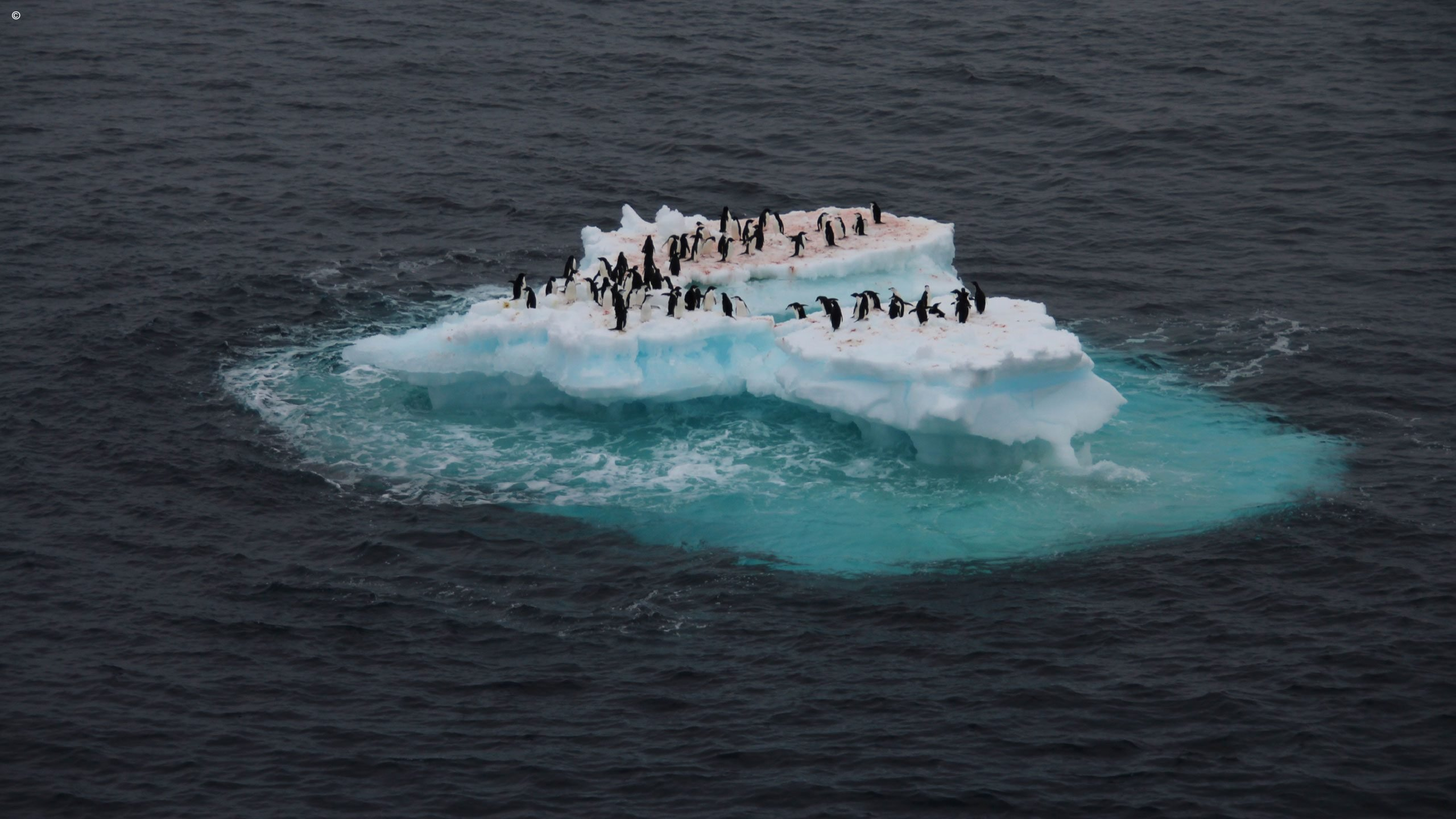 When Is The Best Time To Visit Antarctica  Jacada Travel