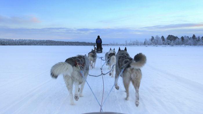 husky-sleigh-ride-lapland