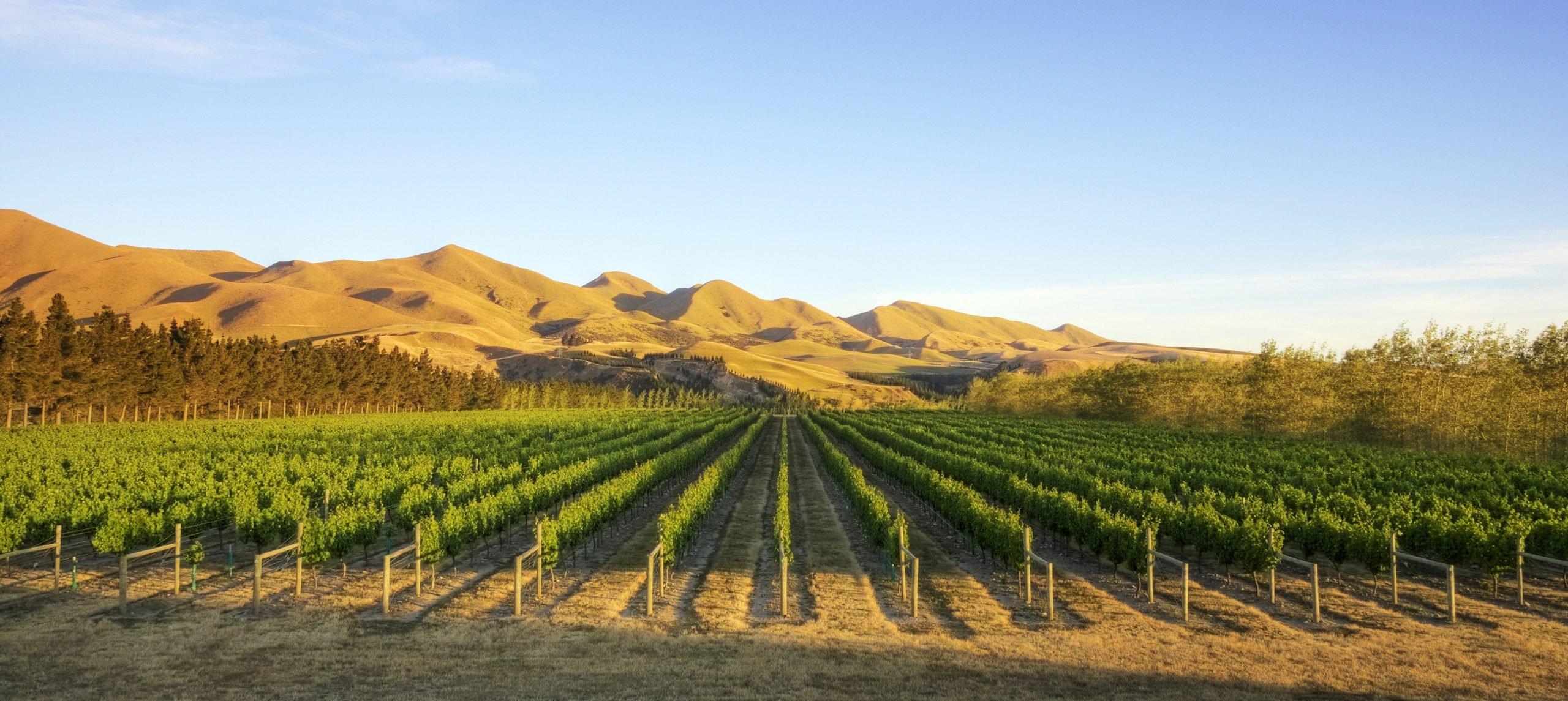 Luxury New Zealand Food And Wine Journey Jacada Travel - World-class-canterbury-estate-with-oceanviews