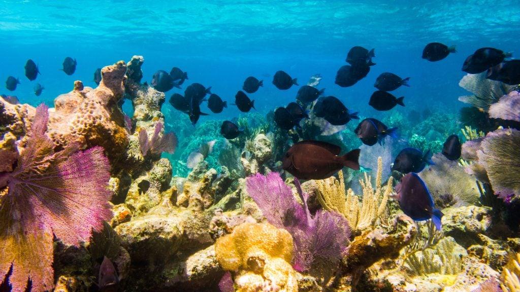 Coral reef Belize.
