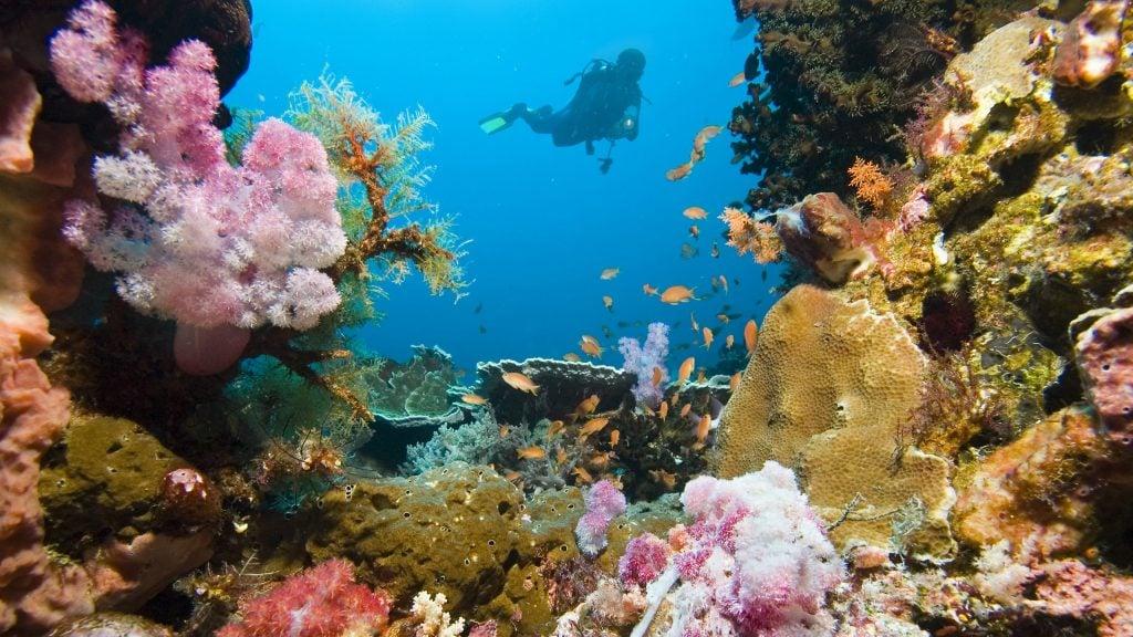 diver-coral-garden