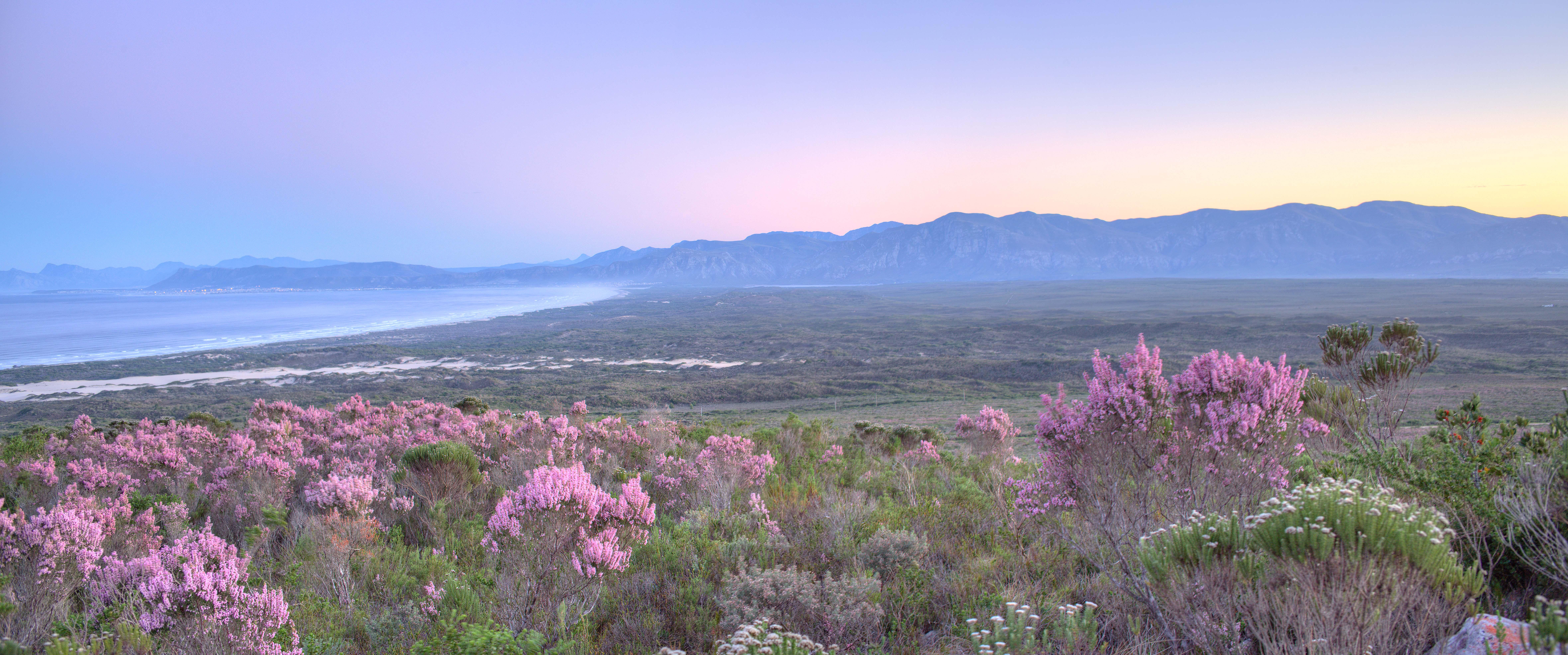 grootbos-floral-cape-kingdom
