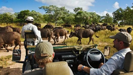 royal-malewana-safari