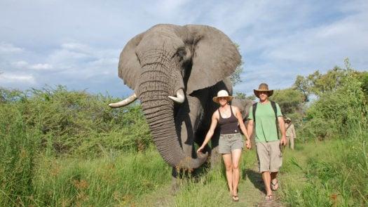 Walking with elephants, Stanley's Camp, Botswana, Africa
