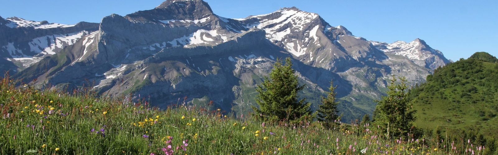 gstaad-mountain-and-flowers