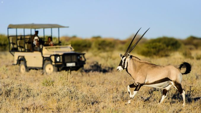 Antelope seen on safari, Central Kalahari Game Reserve, Botswana