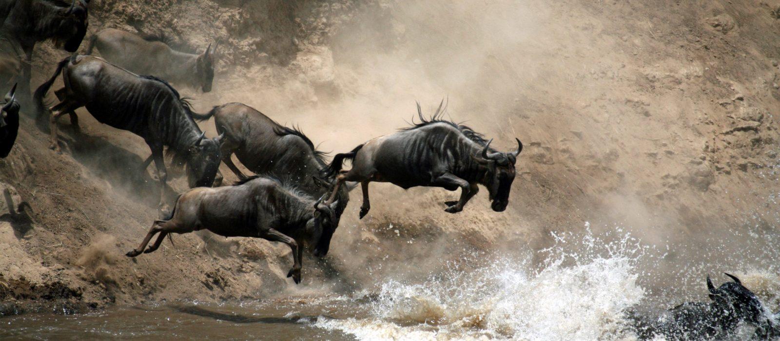 great-migration-river-crossing-kenya