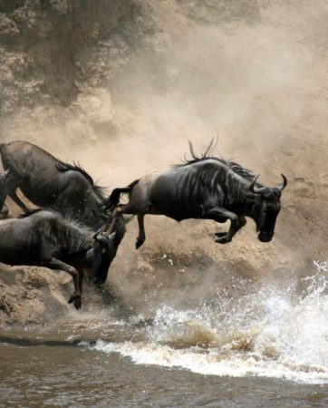great-migration-river-crossing-kenya