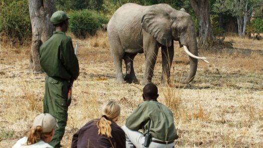 elephant-walk-africa