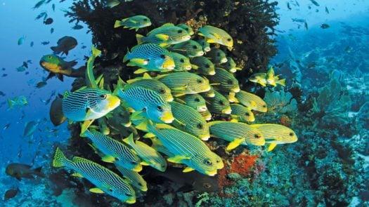 banc-de-poissons-raja-ampat-indonésie