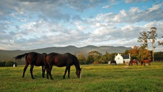 Kurland South Africa Horse Riding