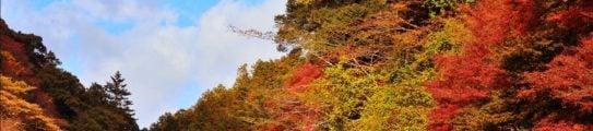 arashiyama-bamboo-forest-autumn-leaves