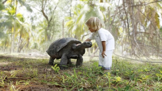 A child strokes a tortoise
