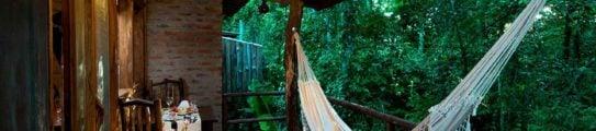 hammock-jungle