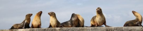 Sea lions, the Galapagos