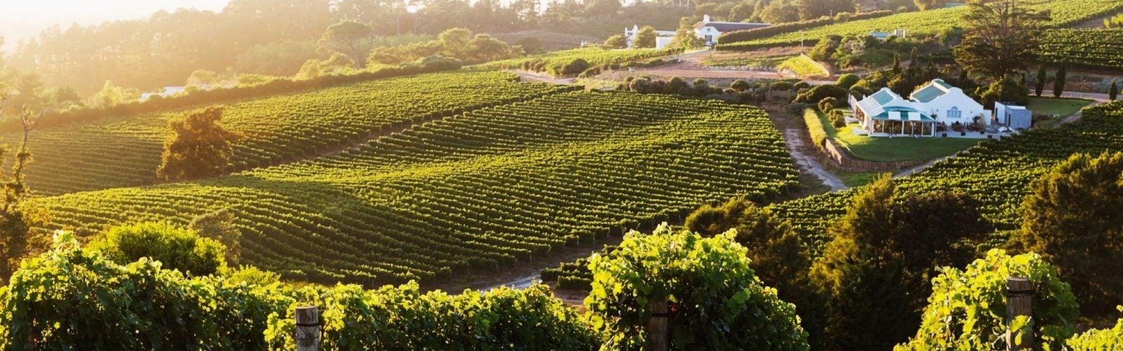 Constantia Winelands South Africa
