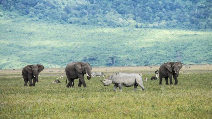 rhino-ngorongoro-crater-tanzania