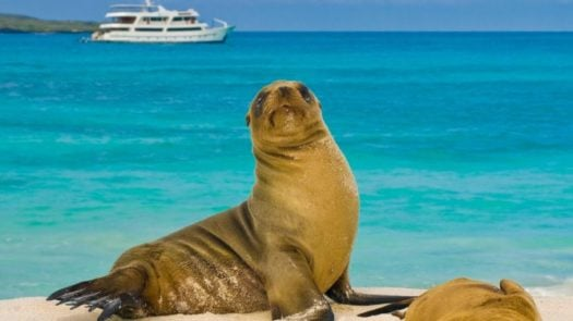 Sealion and cruise ship, Galapagos Islands, Odyssey Cruises,