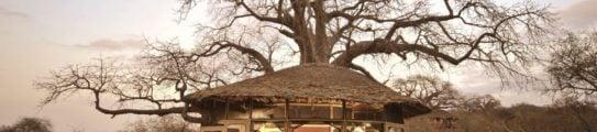 Tarangire Treetops exterior view, Tarangire National Park, Tanzania