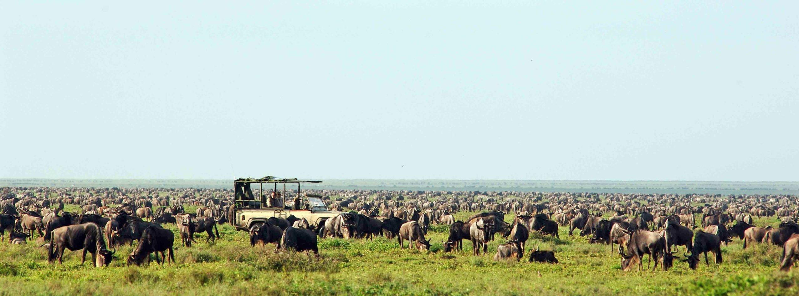 Great Migration safari, Tanzania, Africa