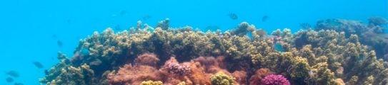 Coral Reef Sal Salis Australia