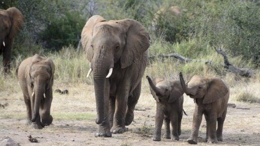 elephants-madikwe-game-reserve-south-africa