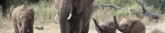 elephants-madikwe-game-reserve-south-africa