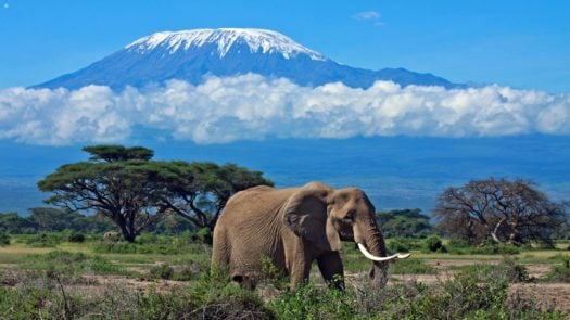 kenya_amboseli_elephant_kilimanjaro