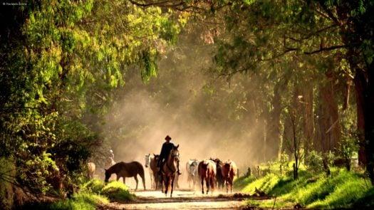 Horses Zuleta Otavalo Ecuador