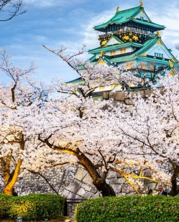 cherry-blossom-castle-japan