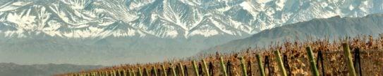 mendoza-grape-vines-argentina
