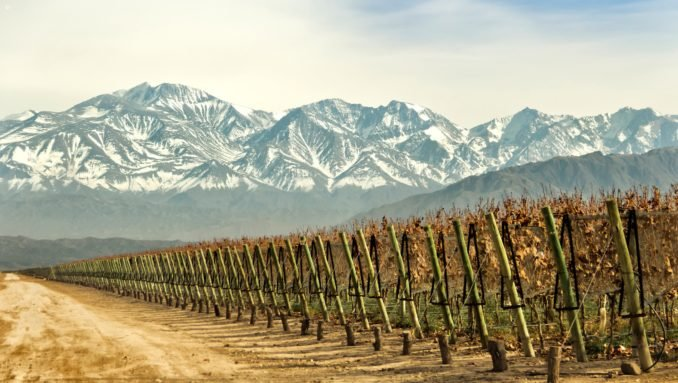 mendoza-grape-vines-argentina