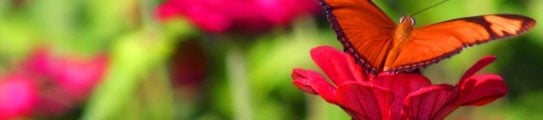 latin-america-costa-rica-butterfly