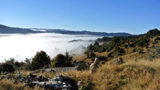 Poronui Taharua Valley New Zealand Trekking