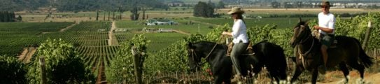 Horseriding through the vineyards, Casablanca Valley, Wine Region, Chile