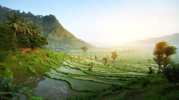 Landscape in Ubud, Bali